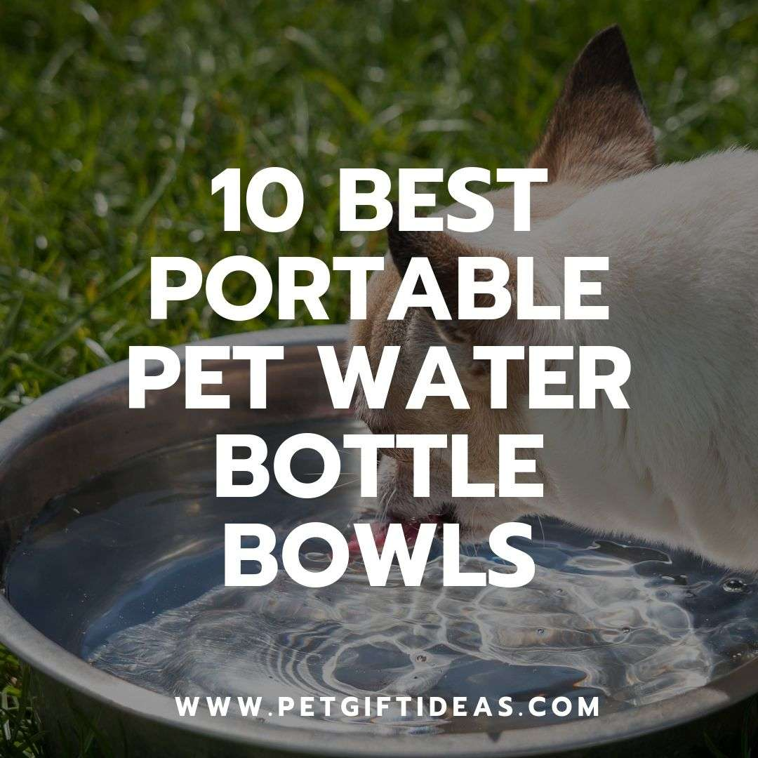 Portable Pet Water Bottle Bowls